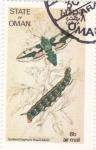 Sellos de Europa - Omán -  mariposa- metamorfosis
