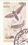 Sellos de Asia - Omán -  mariposa- metamorfosis