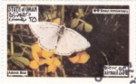 Stamps Oman -  mariposa