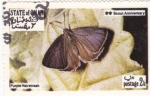 Sellos de Asia - Omán -  mariposa