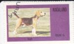 Sellos de Asia - Nagaland -  Perro de raza- beagle