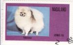 Sellos de Asia - Nagaland -  Perro de raza- pomeranian