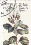 Stamps of the world : Oman :  FLORES-