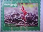 Stamps : America : Venezuela :  Protección de la Biodiversidad Venezolana - Reforestación del Parque Nacional Macarao.