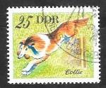 Sellos del Mundo : Europa : Alemania :  1834 - perro collie