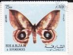 Sellos de Asia - Emiratos Árabes Unidos -  MARIPOSA
