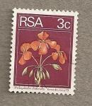Sellos de Africa - Sudáfrica -  Flores Pelargonium