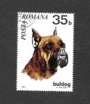 Sellos de Europa - Rumania -  2228 - Bulgod