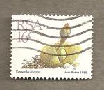 Stamps Africa - South Africa -  Planta Vanheerdea divergens