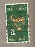 Stamps South Africa -  Gacela