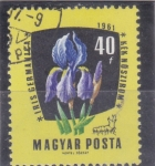 Stamps Hungary -  FLORES- iris germanica