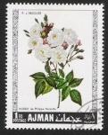 Sellos de Asia - Emiratos Árabes Unidos -  Rosas, Ajman