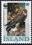 Stamps : Europe : Iceland :  FALCO  RUSTICOLUS  ADULTO