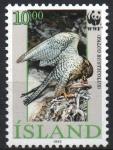 Stamps : Europe : Iceland :  FALCO  RUSTICOLUS  ALIMENTADO  POLLUELOS