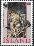Stamps : Europe : Iceland :  FALCO  RUSTICOLUS  CON  SUS  POLLUELOS