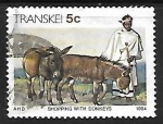 de Africa - Sudáfrica -  Transkei - ganado