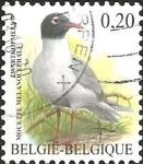 Stamps : Europe : Belgium :  Mediterranean Gull (Larus melanocephalus)