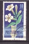 de Europa - Rumania -  serie- flores ornamentales