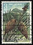 de Europa - España -  Flora - Pino negral