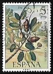 de Europa - España -  Flora - Encina