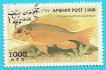 Stamps of the world : Afghanistan :  Peces - Pseudotropheus