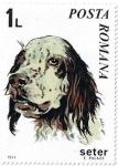 Stamps Romania -  Perros 71, Setter (Canis lupus familiaris)