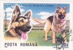 Stamps Romania -  PERRO DE RAZA- PASTOR ALEMÁN