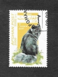 Stamps Afghanistan -  Gato