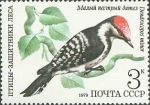 Stamps : Europe : Russia :  Pájaros