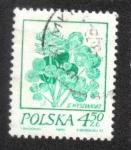 Sellos del Mundo : Europa : Polonia : Dibujos florales de Wyspianski, Trébol