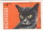 Sellos de America - Nicaragua -  gato birmano azul