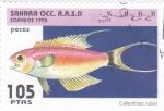 Sellos del Mundo : Africa : Marruecos : peces- callanthias ruber