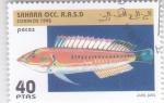 Sellos del Mundo : Africa : Marruecos : peces- julis julis