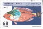 Sellos del Mundo : Africa : Marruecos : peces- scarus cretensis