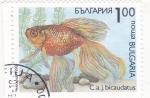 Sellos de Europa - Bulgaria -  pez tropical-bicaudatus