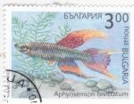 Sellos del Mundo : Europa : Bulgaria : pez tropical- aphyosemion bivittatum