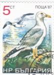 Sellos del Mundo : Europa : Bulgaria : aves- larus argentatus