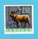 Stamps Poland -  CIERVO