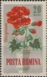 Stamps : Europe : Romania :  Flores de Jardín, Geranio de manzana (Pelargonium odoratissimum)