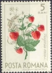 Stamps Europe - Romania -  Frutos del Bosque, Fresa de bosque (Fragaria vesca) y mariposa