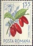Stamps : Europe : Romania :  Frutos del Bosque, Cornel europeo (Cornus mas) y araña