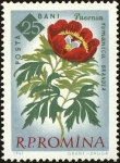 Stamps : Europe : Romania :  Centenario de los jardines botánicos de Bucarest,Peonía (Paeonia peregrina Mill. Var. Romanica)