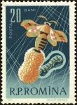 Stamps : Europe : Romania :  Sericultura y apicultura,Capullo de la Polilla de la Seda (Bombyx mori)