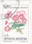 Stamps : America : Argentina :  FLORES- BEGONIA