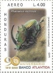 Sellos de America - Honduras -  Coleópteros de Honduras