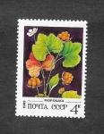 de Europa - Rusia -  Planta