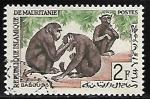 Sellos de Africa - Mauritania -  Simios