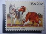 Sellos de America - Estados Unidos -  Malamute de Alaska y Collie - Canis lupus collie
