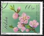 Sellos de Europa - Polonia -  Prunus persica