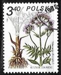 Sellos de Europa - Polonia -  Valeriana offcinalis